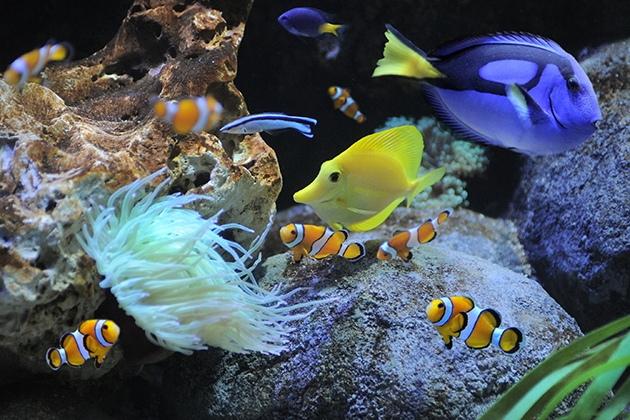 Gardaland Aquarium